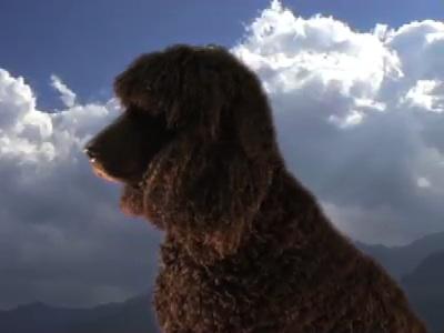 "Julie Freeman - ""dogs' ears"" - link"