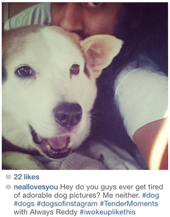 crouching_dog_hidden_selfie