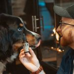 Everything you need to know about giving your pets CBD