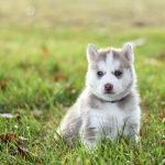 Prepping Your Home and Life for a Dog